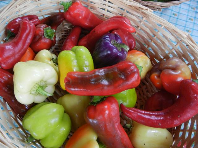 A basket with bell peppers and large sweet peppers in many different colors: red, green, purple, white