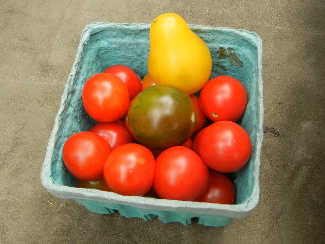 A container of cherry tomatos, most orange, but one yellow and bell-shaped, and one green and somewhat striped