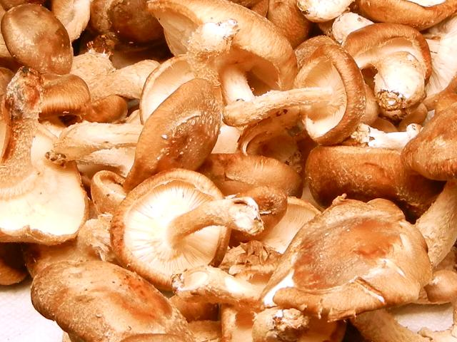Fresh shiitake mushrooms, showing light brown cap and light gills, caps curving slightly down, and stems that become wider at the base