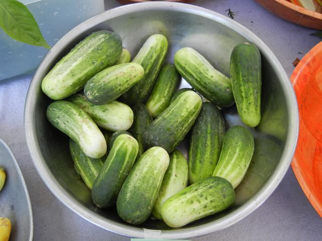 A metal bowl containing numerous small cucumbers, showing dark green color fading to white, with blunt rounded ends