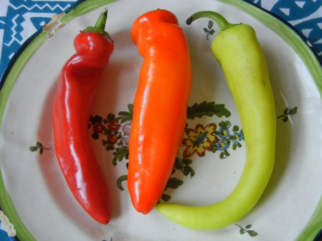Three hungarian wax peppers on a colorful plate against a blue-and-white tablecloth, showing one bright red pepper, one bright orange, and one yellow-green