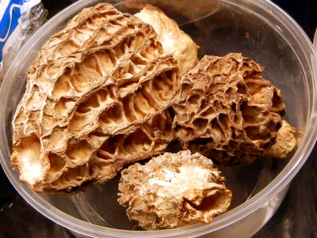 Morel mushrooms in a plastic container, showing a spongy appearance