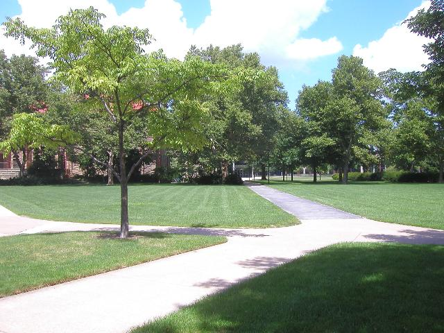 A grassy area with crossing paths, on a college campus, with numerous trees in the background and an Amur cork tree in the foreground