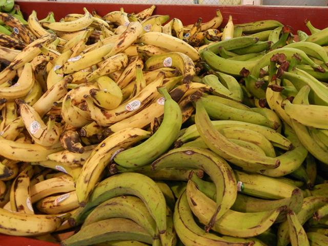 Green plantains on the right, yellow plantains on the left, most showing some black bruising