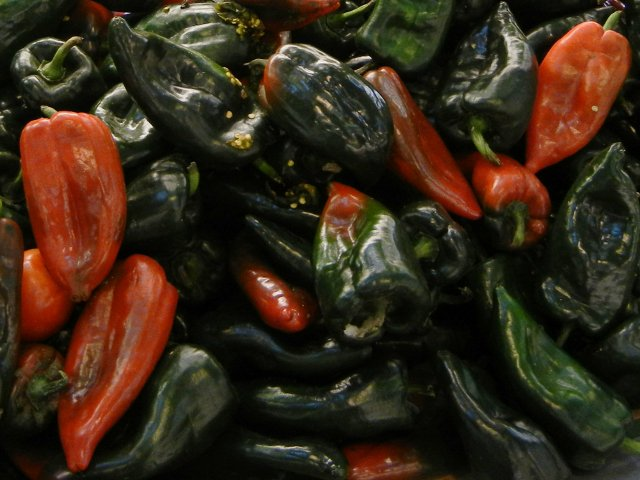 Poblano peppers, large, pointy peppers, most very dark green and shiny,  with some turning a deep red tinged with blackish-green