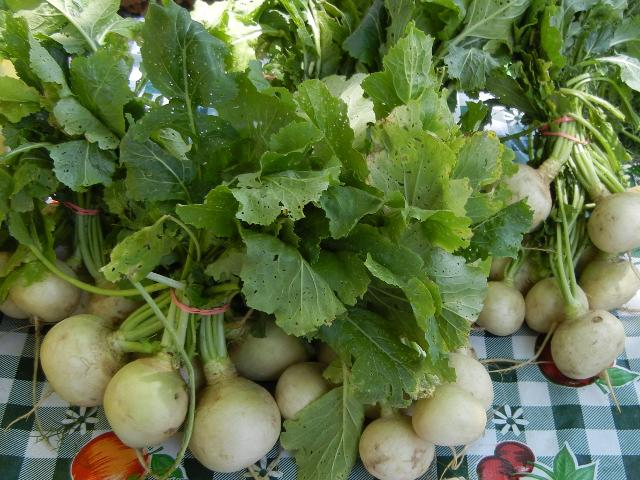 Salad turnips, small white turnips, with leaves attached, on a white and black plaid tablecloth