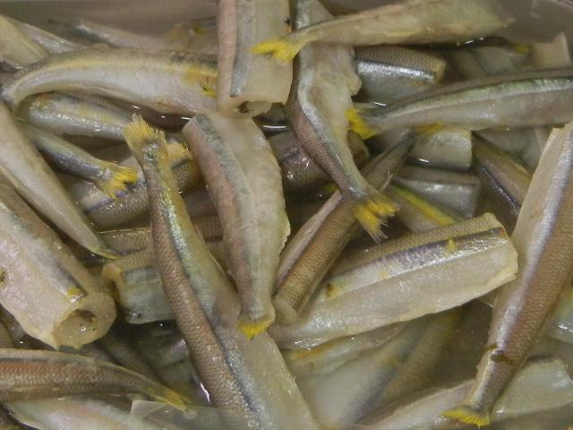 A bin of smelts, very small silvery-grey fish with heads removed and yellow-colored tail fins which are cut short
