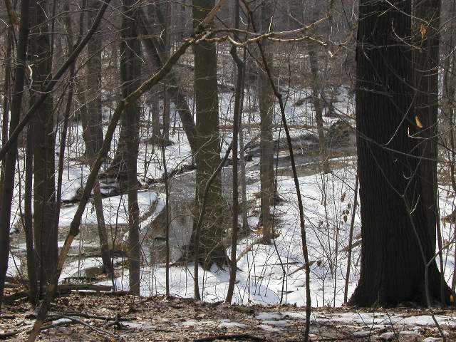 An unfrozen stream flowing through snow-covered ground in a forest with trees of varying diameters
