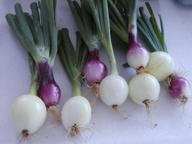 Medium-sized, pristine looking onions, most white and round, some deep purple and oval-shaped, with green stems attached, on a white tablecloth
