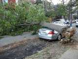 A tree fallen across a street, crushing a car and smashing its rear windshield