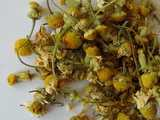 dried chamomile flowers, with golden flowerheads