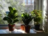 Four houseplants on a windowsill, with afternoon sunlight filtering through their leaves