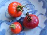 Three large whole rose hips, an intense red-orange color, on a light blue pattered plate