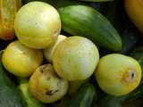Lemon cucumbers, a pale yellow, lemon-sized, nearly perfectly round variety of cucumber