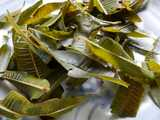 Wet lemon verbena leaves, dark green, somewhat tough looking, after being steeped as an herbal tea