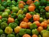 Manzano peppers, looking like small bell peppers, shades of green, yellow, and yellowish-orange
