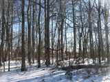 Dark tree trunks in a forest, bright white snow, on a sunny day in winter