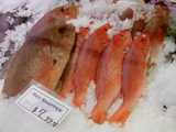 Whole red snapper, on ice, with several smaller fish and one very large fish, and a sign reading: Red snapper, $7.99 lb