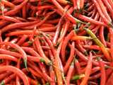Long, narrow, straight, red chili peppers