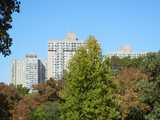 Three high-rise buildings behind trees showing the beginnings of fall color