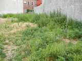 Vacant lot showing numerous weedy plants, some exposed ground, and two bare walls along the back, with a brick house viewable behind