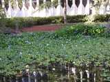 A pond almost completely overgrown with water hyacinths, showing some purplish-blue blossoms, and the background and water reflection showing an ugly building in the same architecture of the World Trade Center